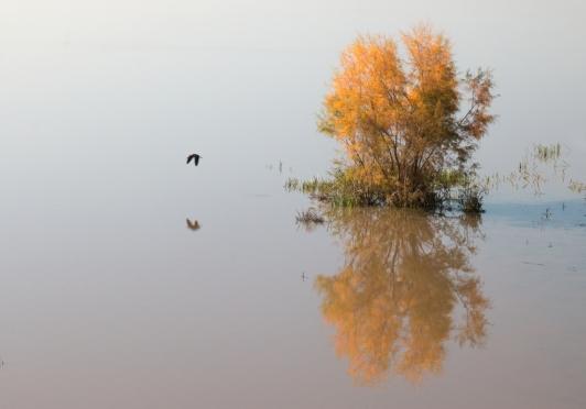 Naast El Rocío ligt NP Doñana, een enorm wetlands gebied