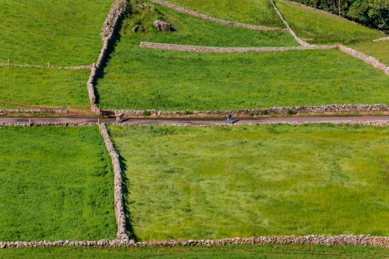 Weiden op Terceira